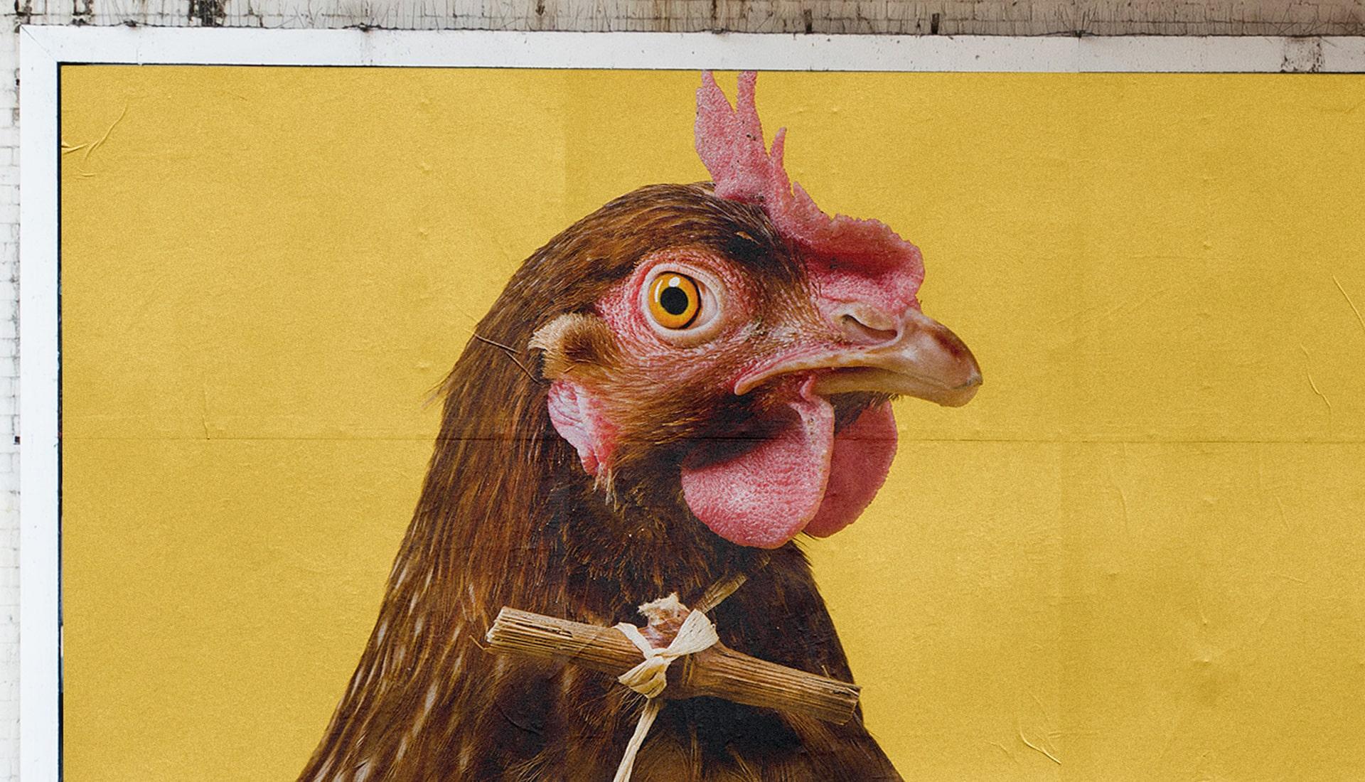 dettaglio-gallina-zaccagnini